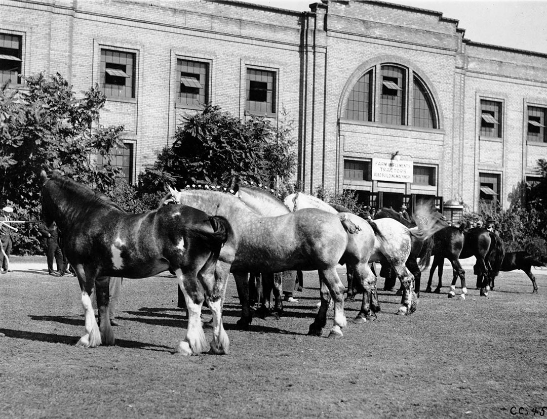 Horse Showing, 1934