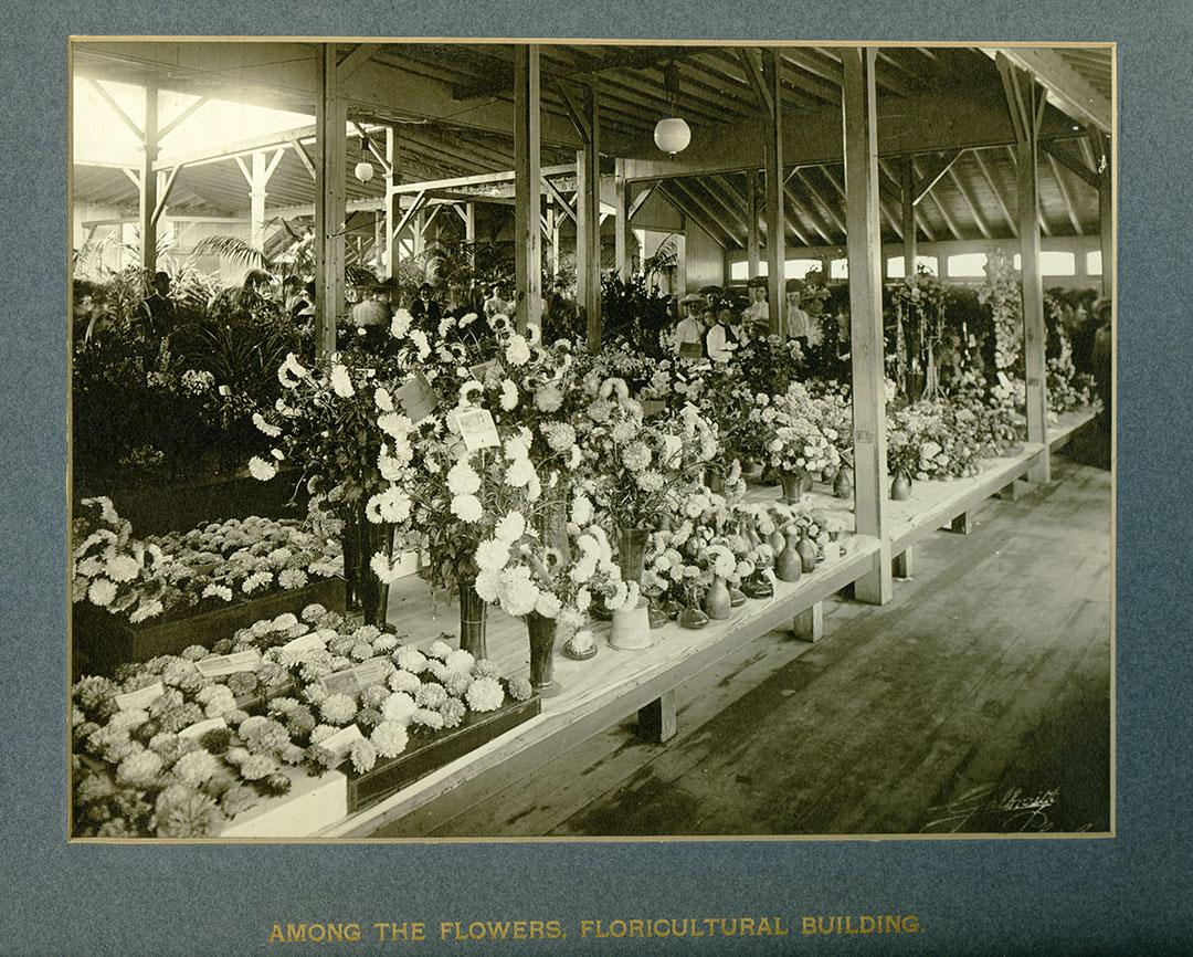 Flower Competition, 1903