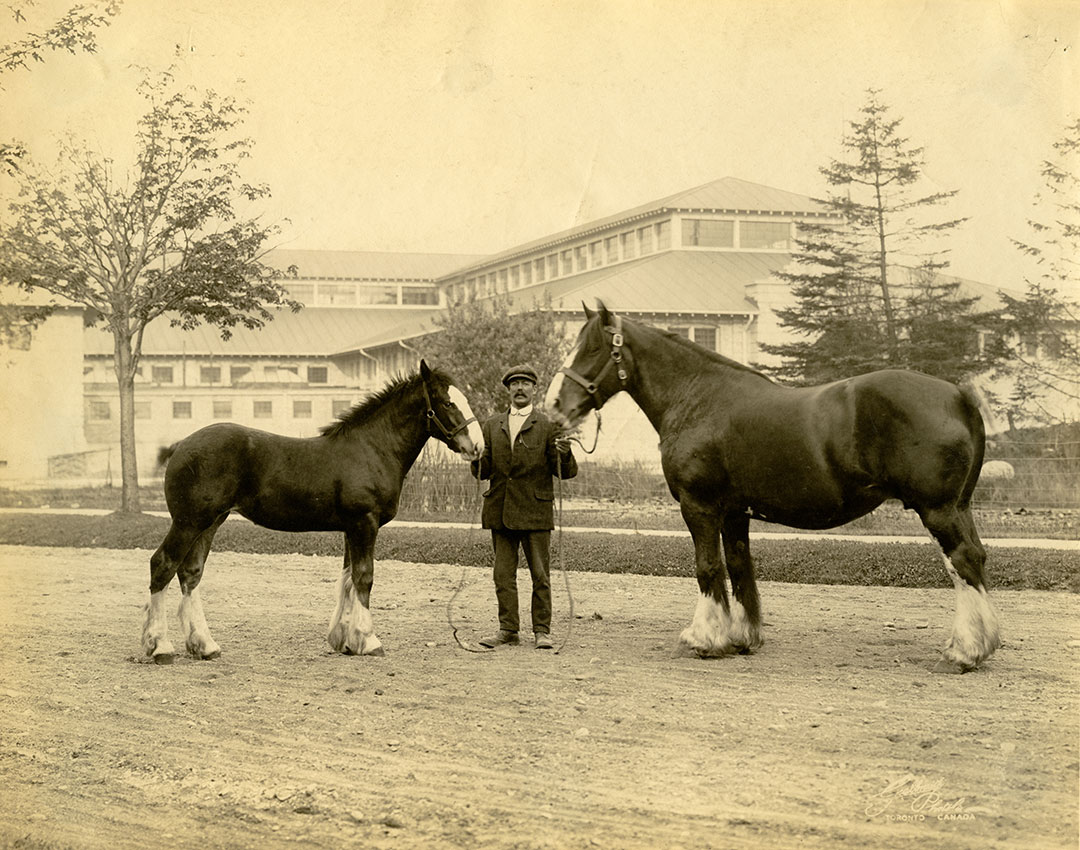 Man With Horse And Pony In 1906