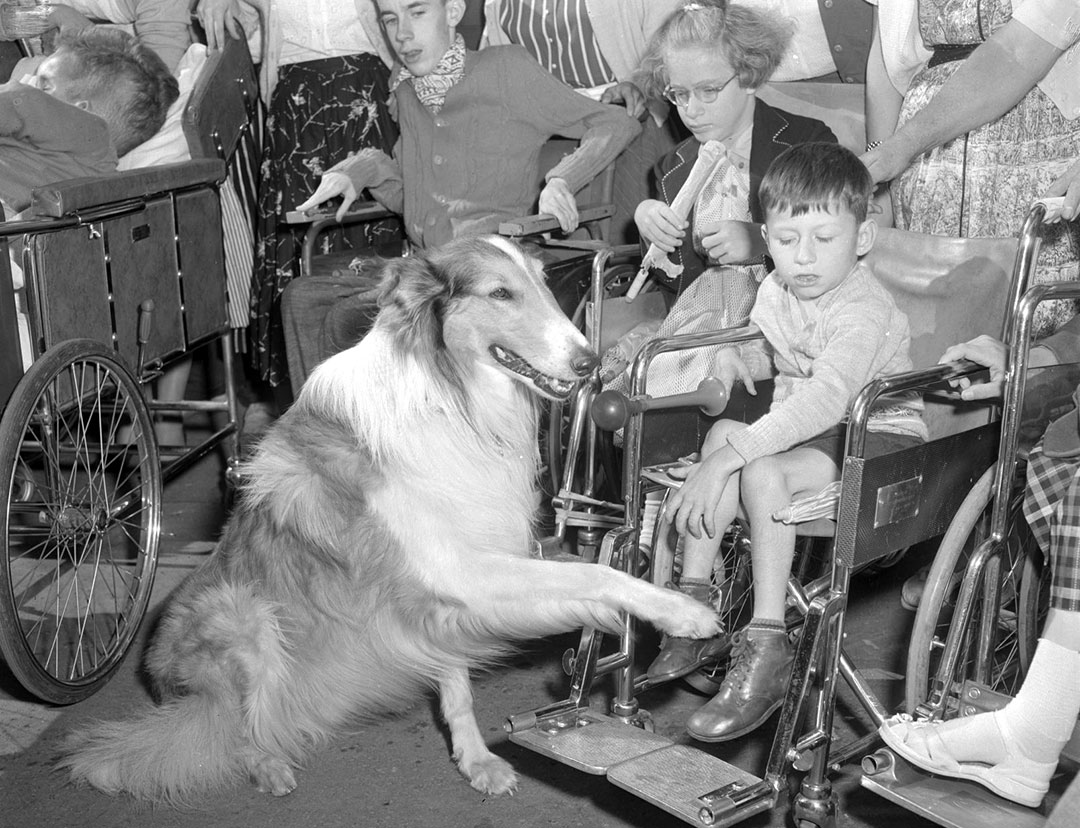 TV's Lassie With CNE Visitors, 1955