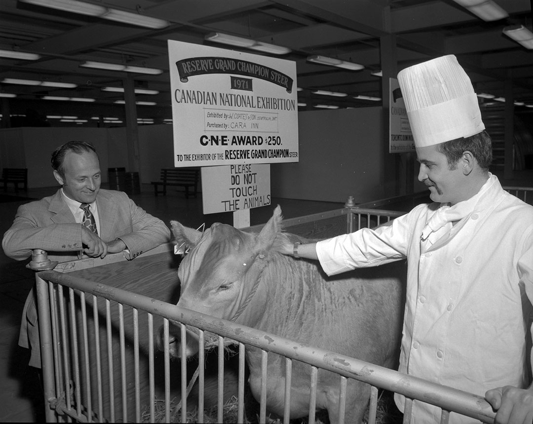Chef Admiring Grand Champion Steer, 1971